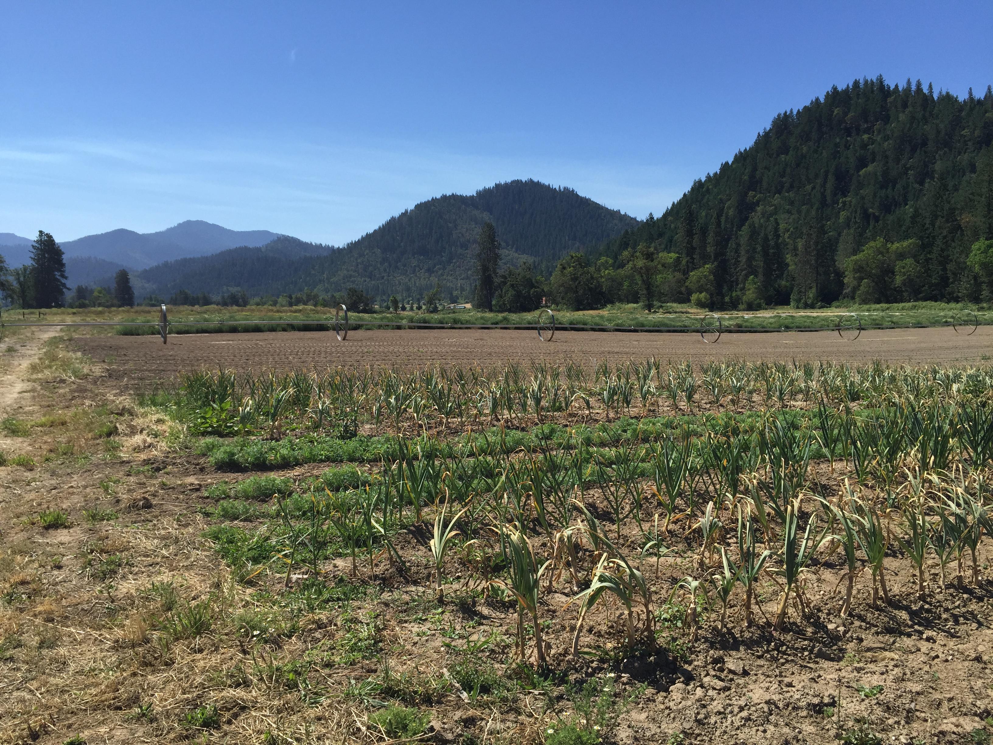 Wide open farmland